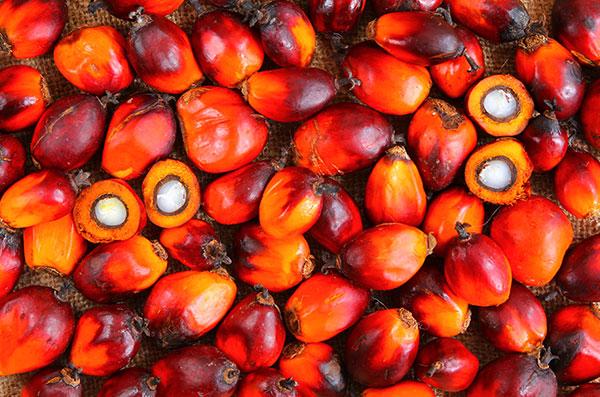Тропічні масла